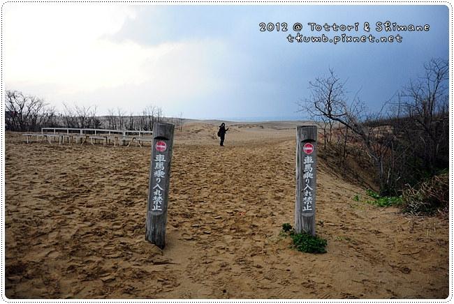 鳥取沙丘 (2).jpg