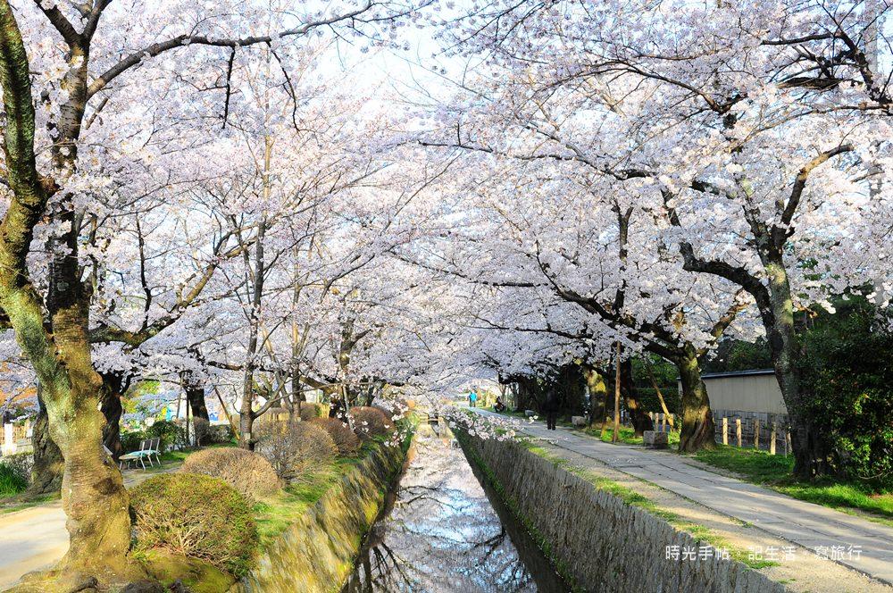 京都櫻花散步3洛東01