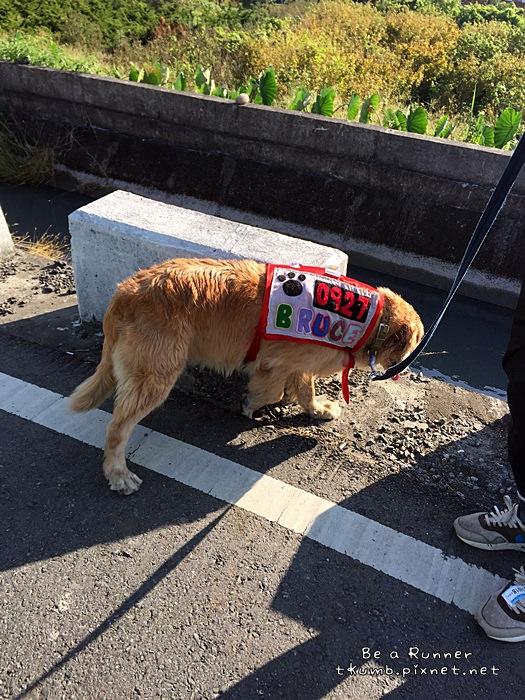 2015田中馬拉松2015-11-08 08.07.45.JPG
