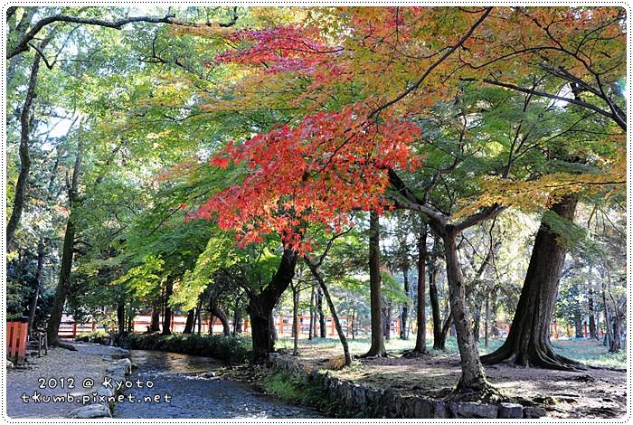 上賀茂神社 (10).jpg